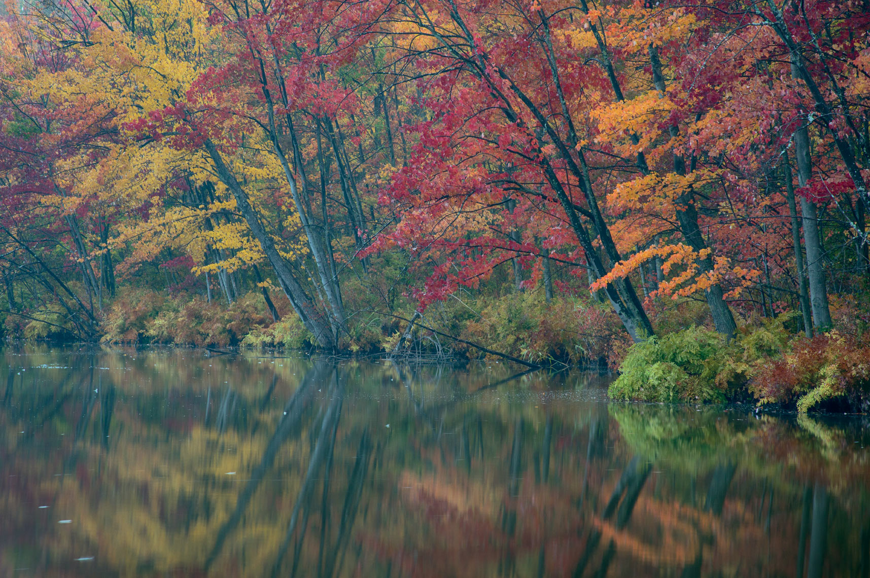 Fall Foliage, Beaver Lake Nature Center in Autumn, New York State