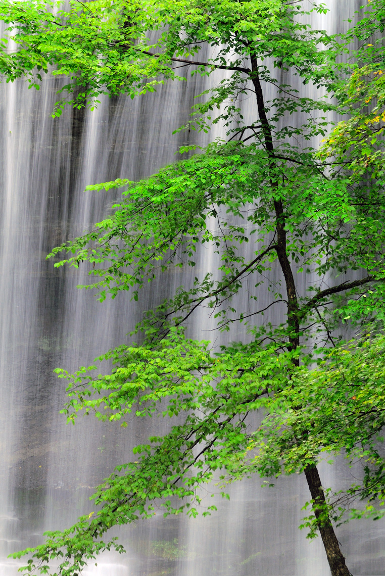 Tree and waterfall