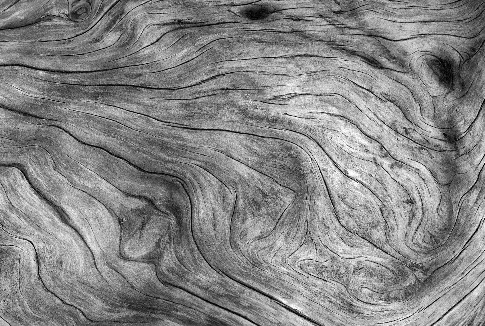 Driftwood in monochrome