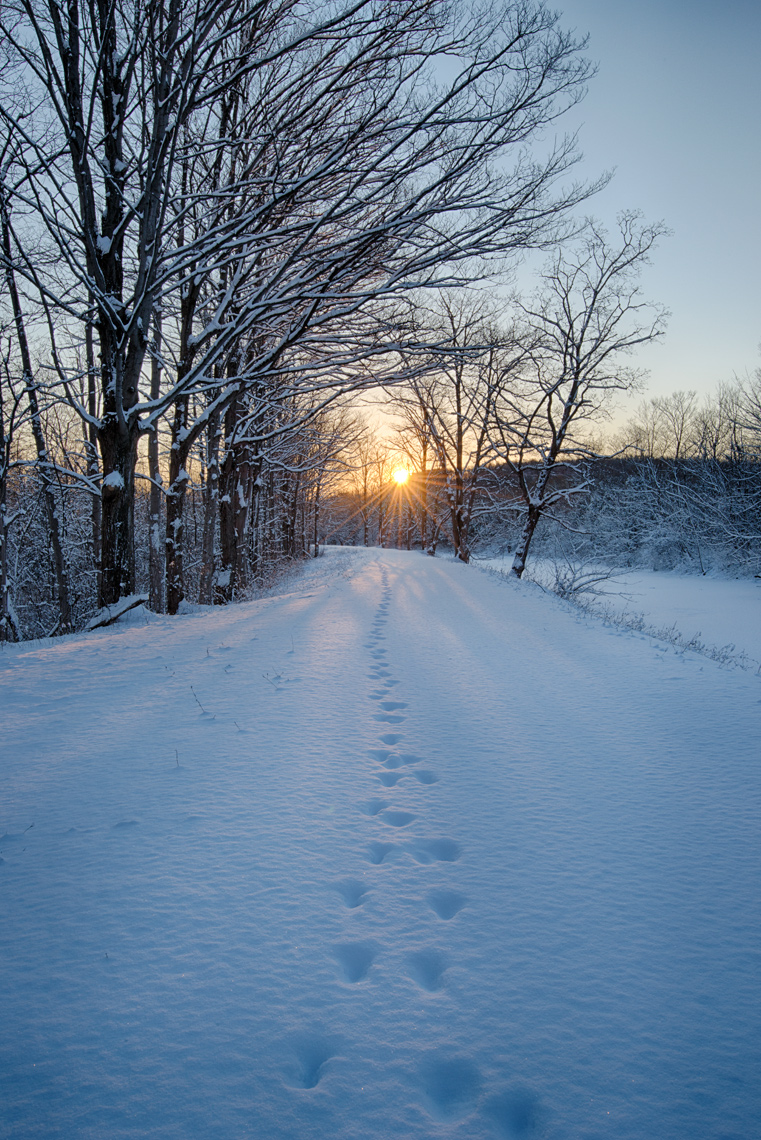 Animal Tracks in Snow, Erie Canal Path