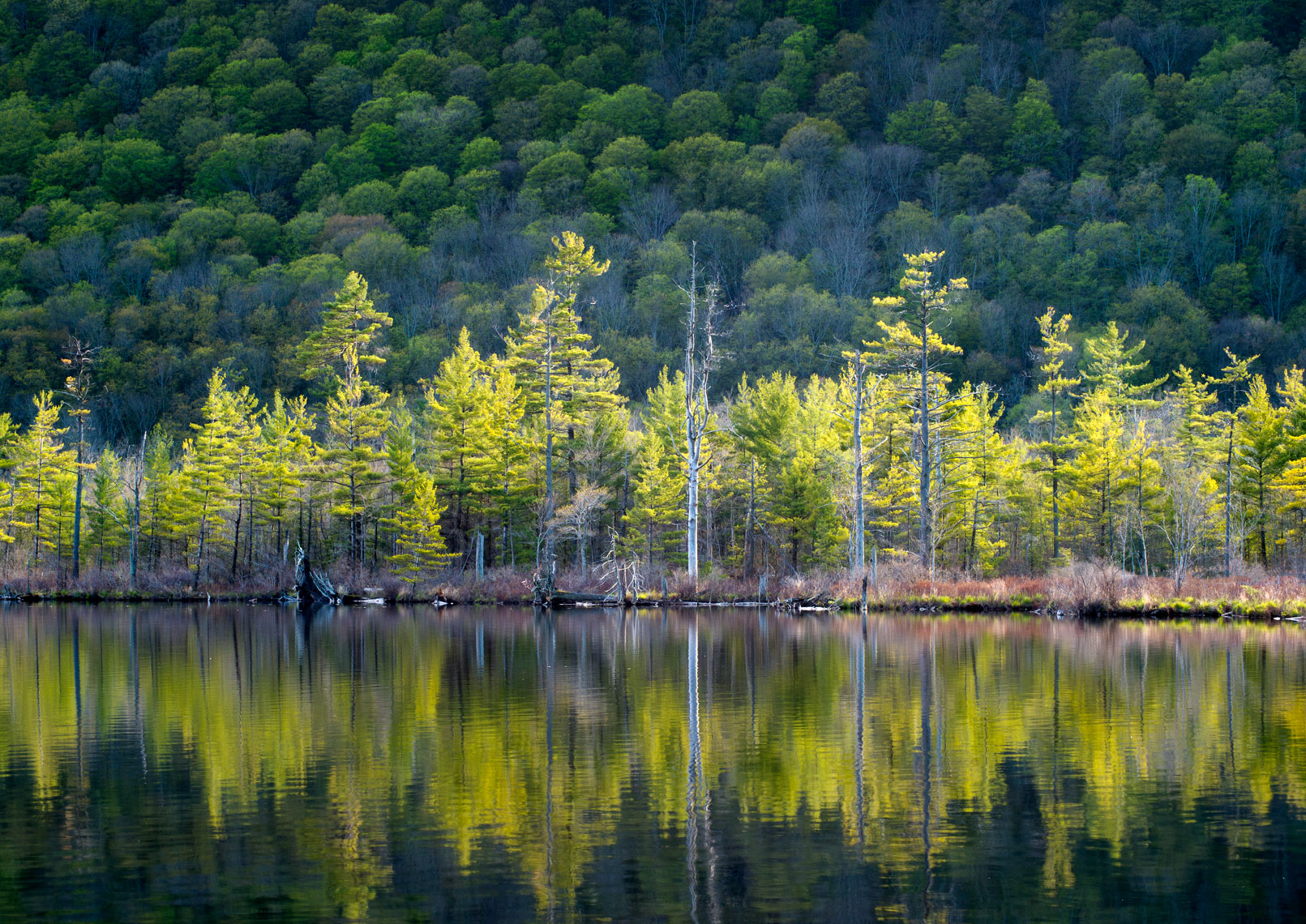 Summer Evening Light, Labrador Pond, New York State
