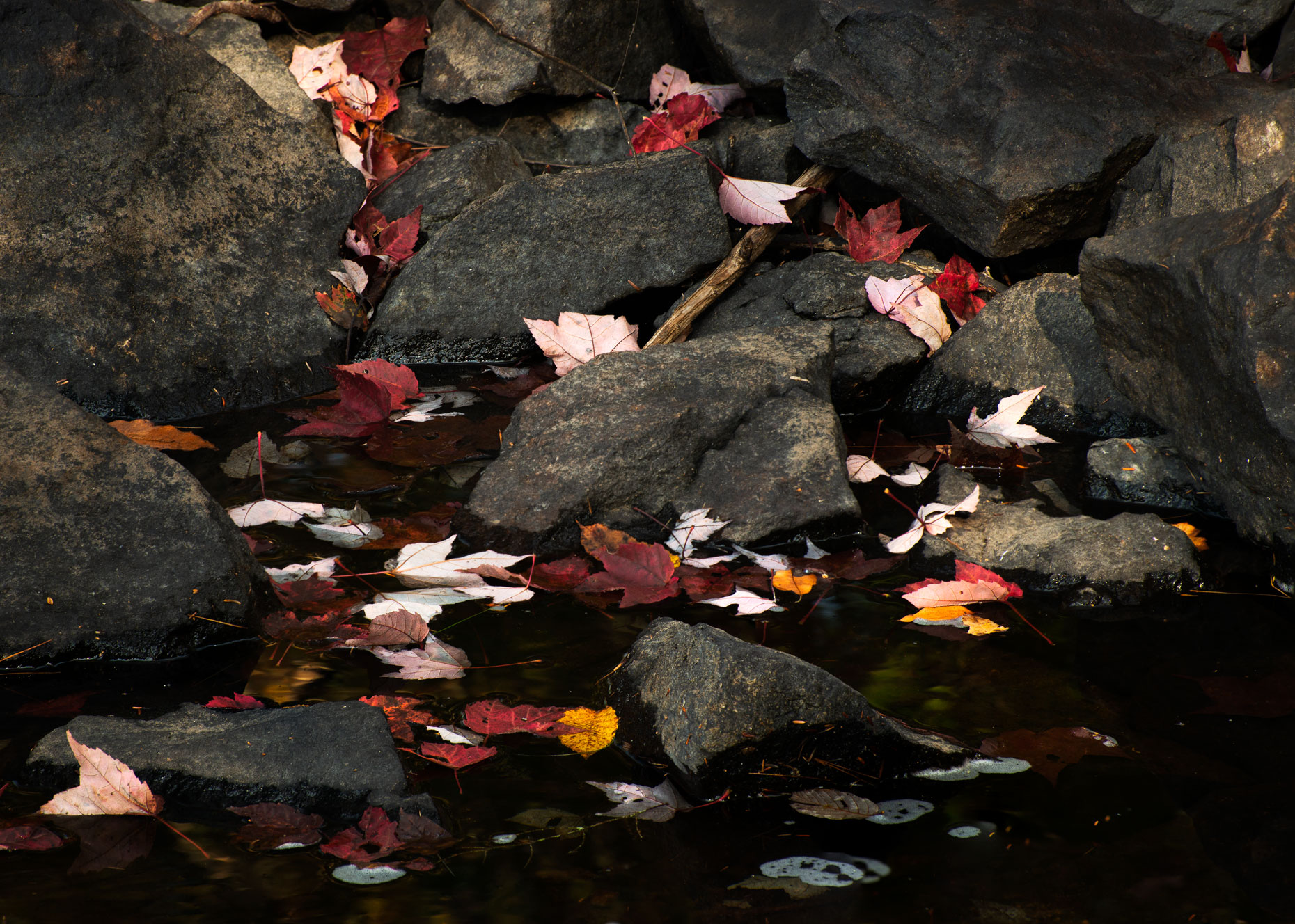 Fallen Leaves on Rocks
