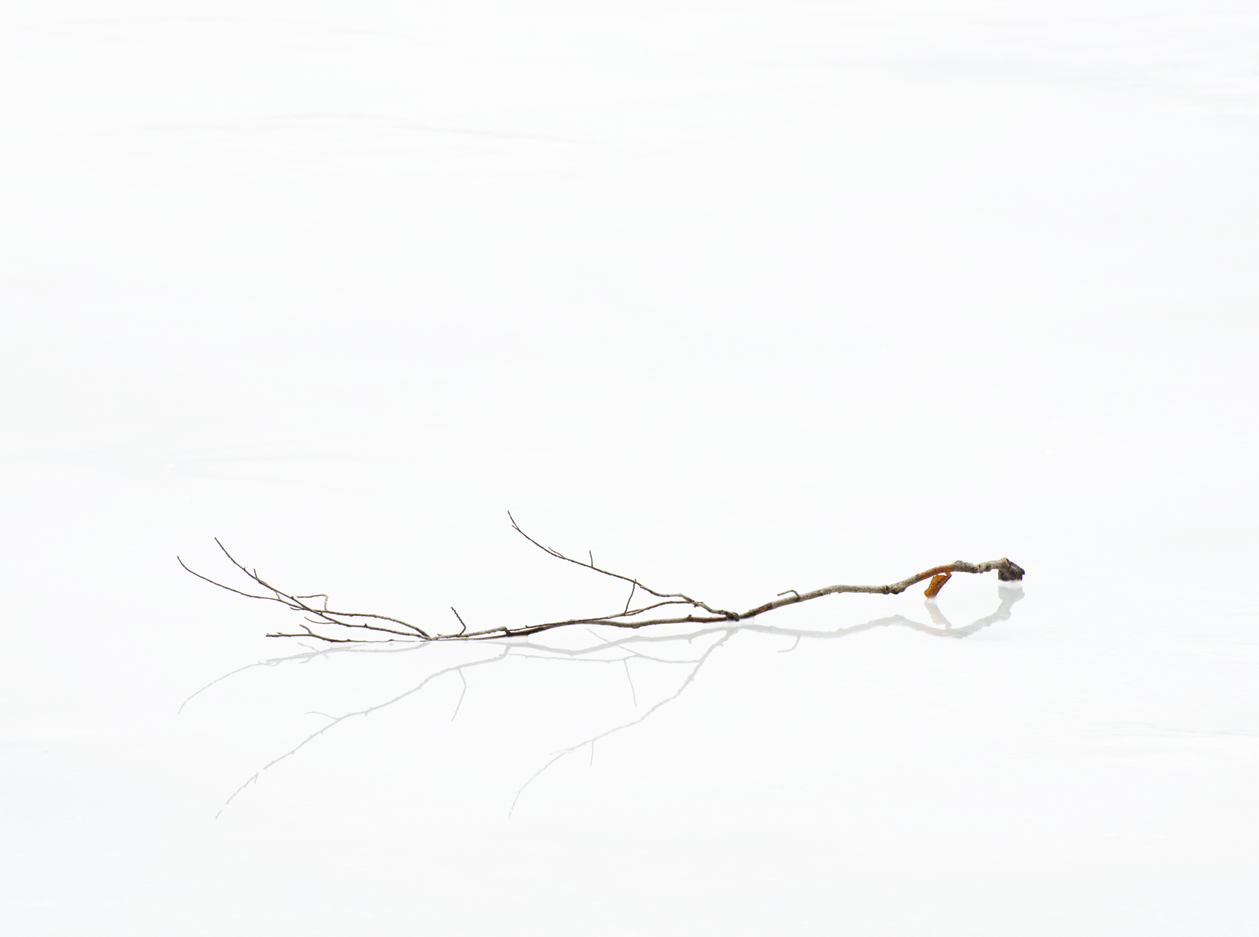 Branch Reflection on Ice