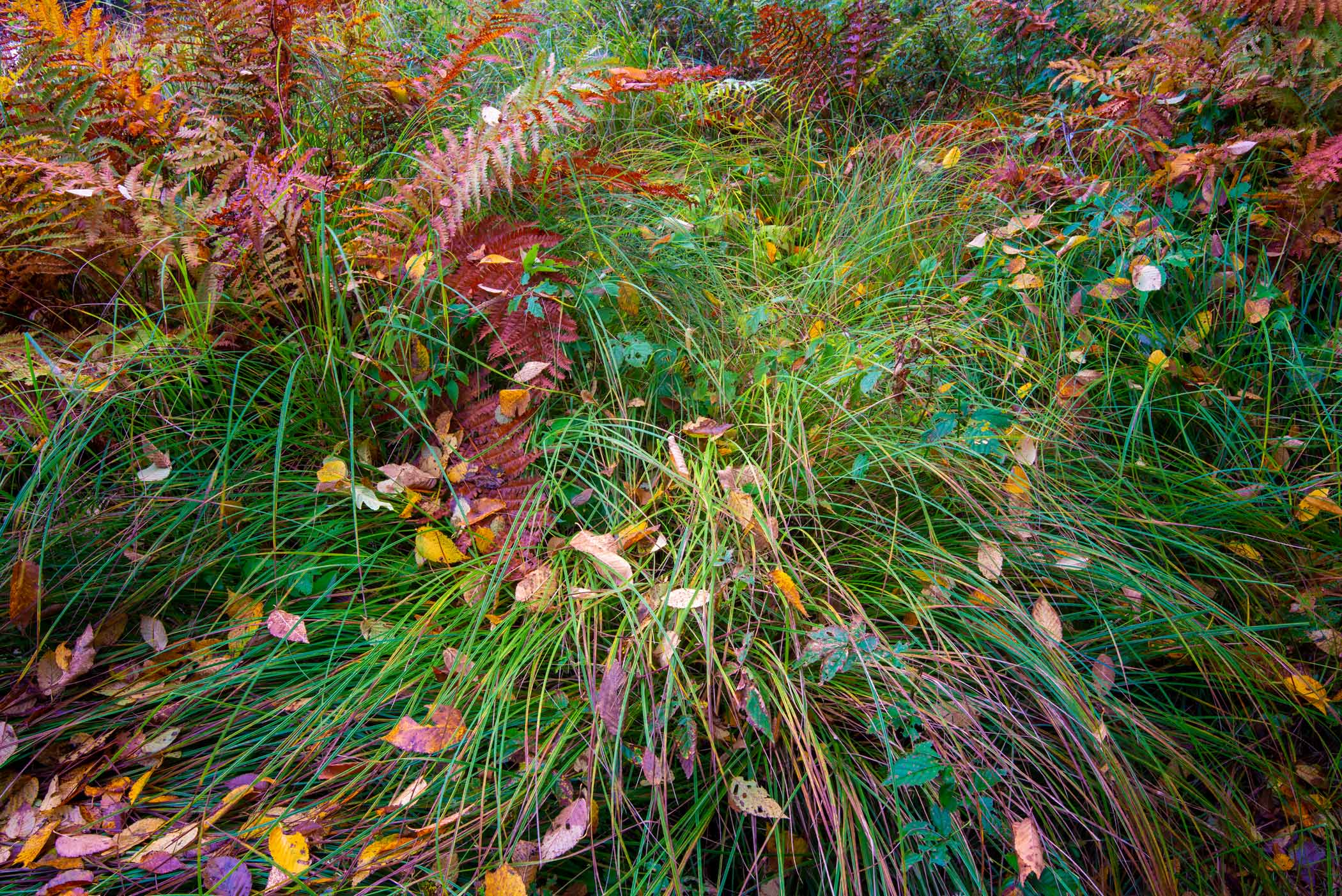 Grasses, Ferns, & Leaves