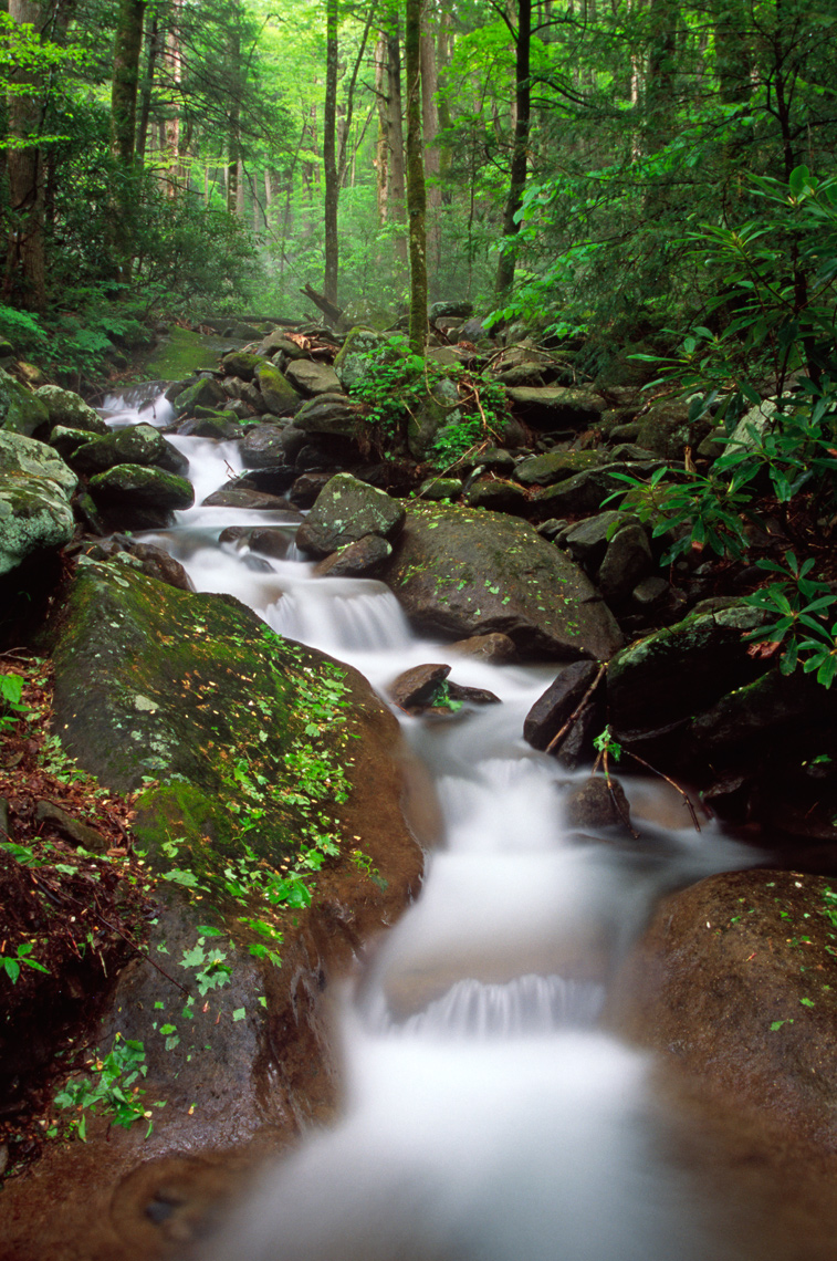 LeConte Creek cascade in spring, Great Smoky Mountains National Park, Tennessee